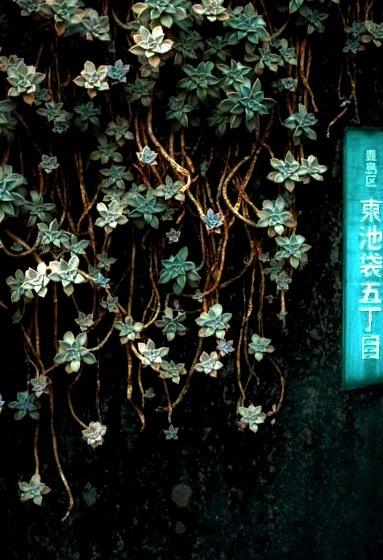 Succulent Vines, Tokyo, Japan