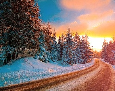 Snow Forest, The Cascades, Oregon