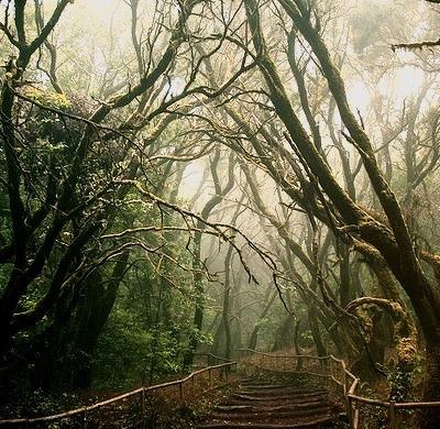 Mystical Bridge, La Gomera, The Canary Islands