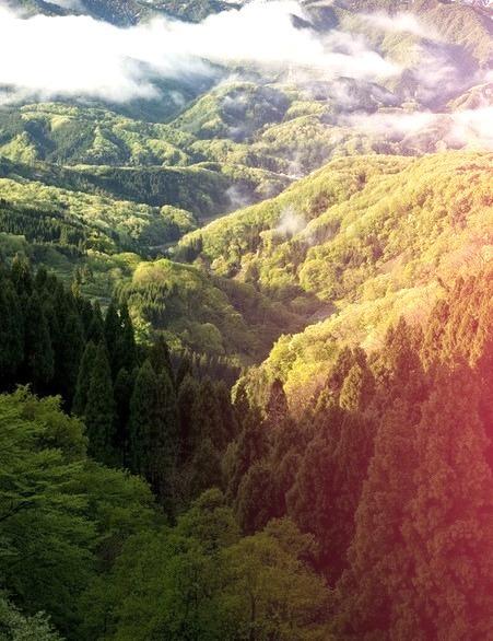 Valley Mist, The Cascades, Washington