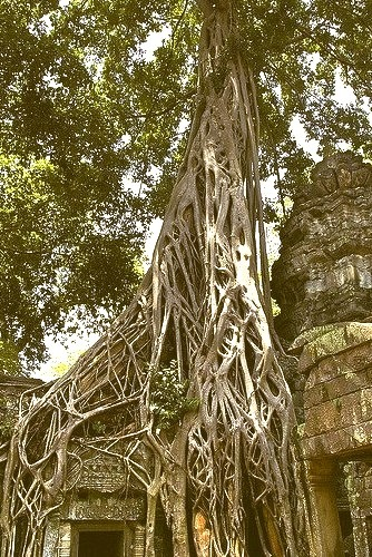 The magnificent and mysterious temple complex of Ta Prohm, where nature definitely has the upper hand over culture, Cambodia