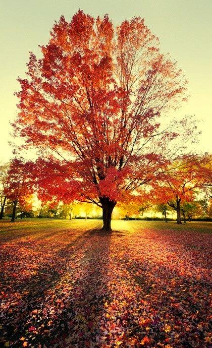 Crimson Sunset, Schaumburg, Illinois