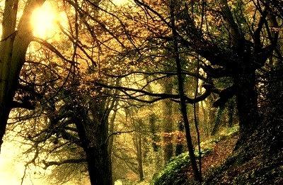 Forest Path, Dublin, Ireland