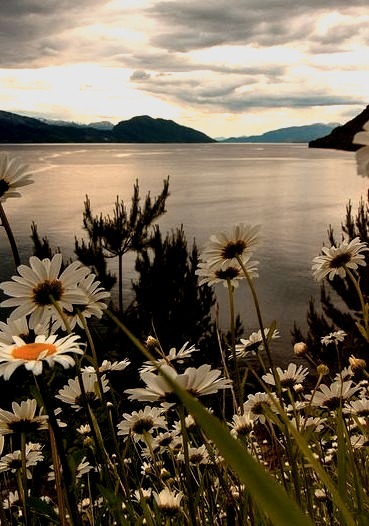It was spring time in the fjordland, Hardanger / Norway